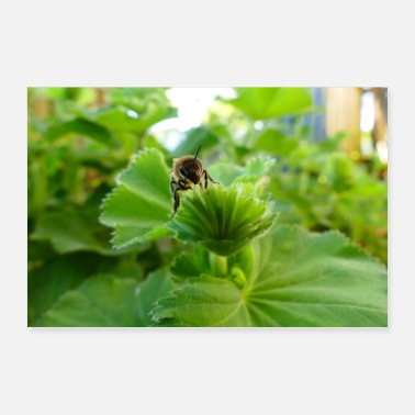 Bumble Bee bee - Poster 36 x 24 (90x60 cm)