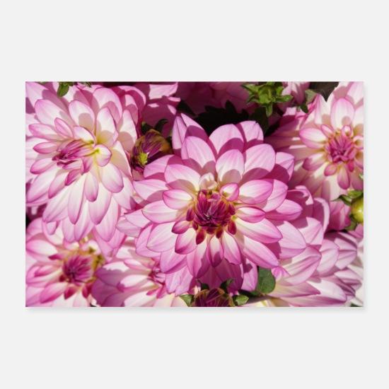 Idee Cadeau Fleur Dahlia Fleur Rose Fleur Rose Posters Blanc