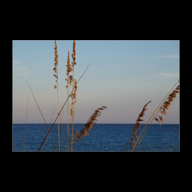 Reeds and sea - Poster 36 x 24 (90x60 cm)
