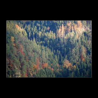 Poster foresta - Poster 90x60 cm