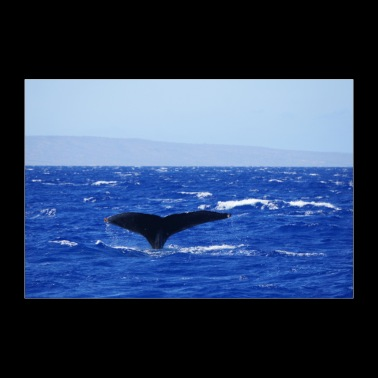Hawaii whale - Poster 36 x 24 (90x60 cm)