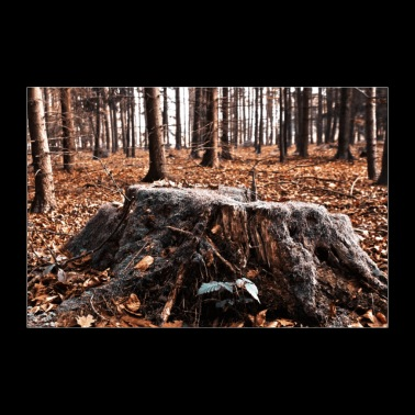 tree stump - Poster 36 x 24 (90x60 cm)