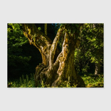 Old tree trunk - Poster 36 x 24 (90x60 cm)