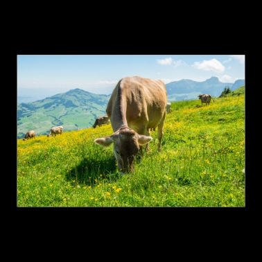 Cows on the alpine pasture - Poster 36 x 24 (90x60 cm)