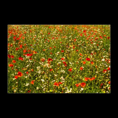 summer meadow - Poster 36 x 24 (90x60 cm)