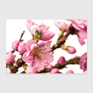 Blossoming peach tree - Poster 36 x 24 (90x60 cm)