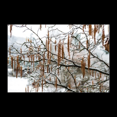 Snowy tree branches - Poster 36 x 24 (90x60 cm)