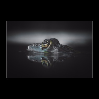 Frog in the water - Poster 36 x 24 (90x60 cm)