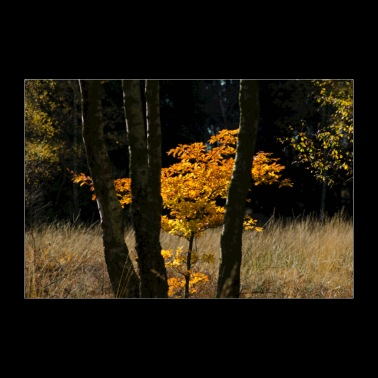 Autumn tree poster - Poster 36 x 24 (90x60 cm)