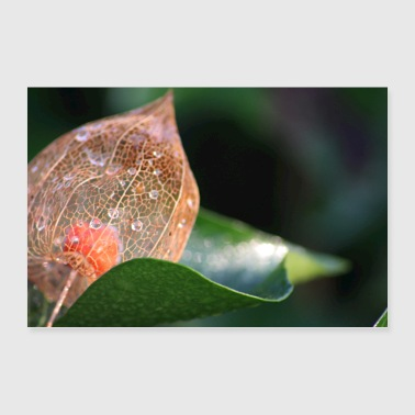 Physalis in winter - Poster 36 x 24 (90x60 cm)