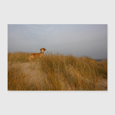 Dachshund in the dunes by the sea - Poster 36 x 24 (90x60 cm)