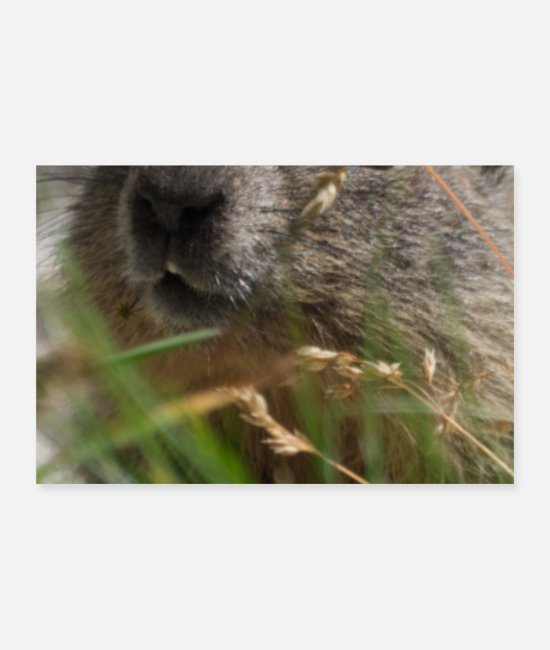 Groundhog Posters - Groundhog Woodchuck Spring Animal Greyhound Photo - Posters white
