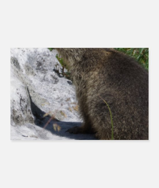 Groundhog Posters - Cute Groundhog Baby Forecasting Photography Spring - Posters white