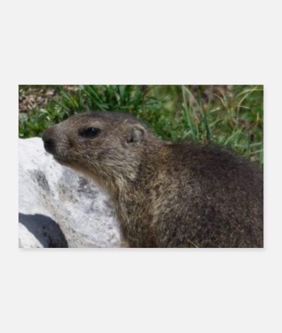 Groundhog Posters - Happy Groundhog Day Woodchuck Shadow Animal Spring - Posters white