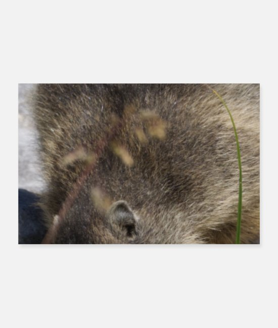 Groundhog Posters - Woodchuck Groundhog Meteorologist Animal Forecast - Posters white