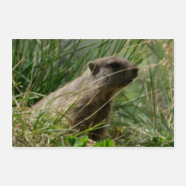Meteorologist Outdoor Groundhog Picture Nature Alps Mountains - Poster