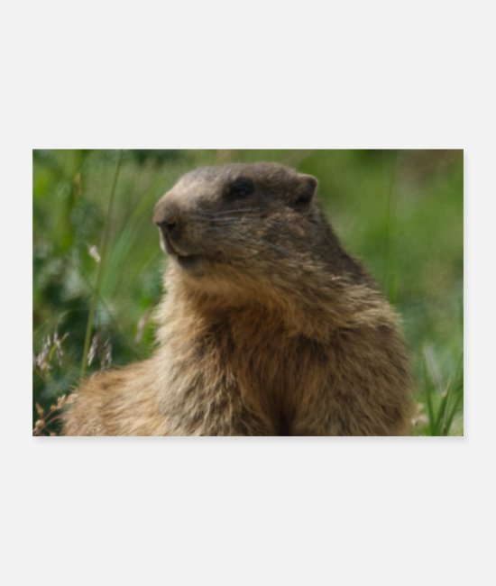 Groundhog Posters - Mother Earth Environmental Woodchuck Picture Photo - Posters white
