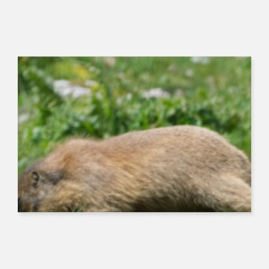 Meteorologist Cute Groundhog Hunter Hunting Woodchuck Animal - Poster