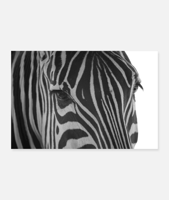 Animal Collection Poster - Equus burchelli - Grants Zebra - Poster Weiß