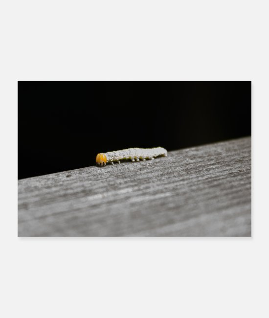 Nature Posters - Caterpillar - Posters white