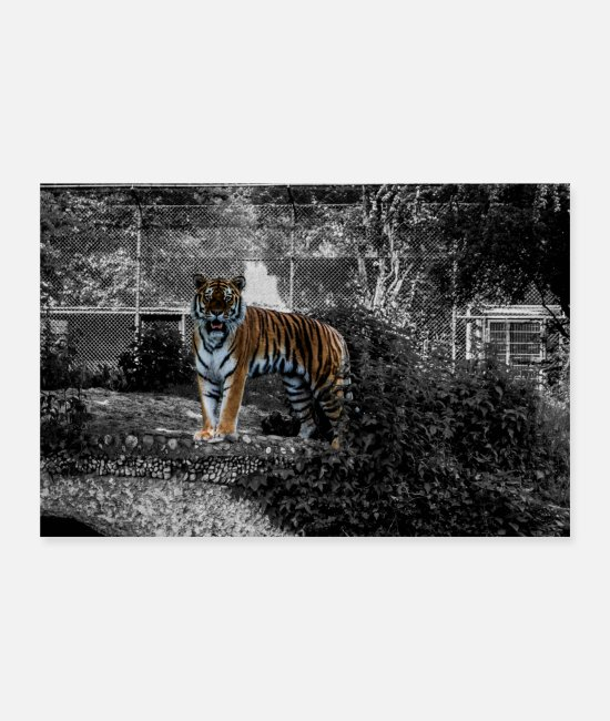 Nature Posters - tiger - Posters white
