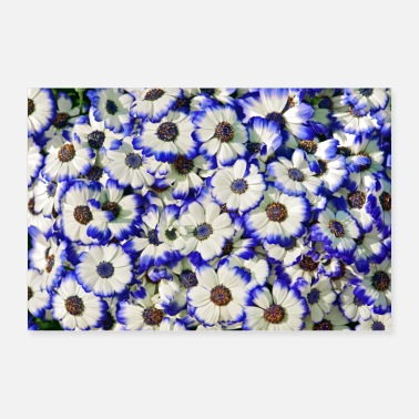 Blue Blue white daisies - Poster