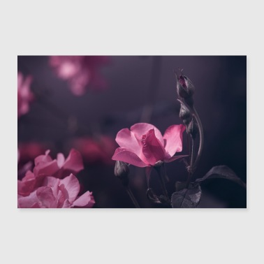 Pastell pinke Rose Blüte Knospe - Poster 30x20 cm