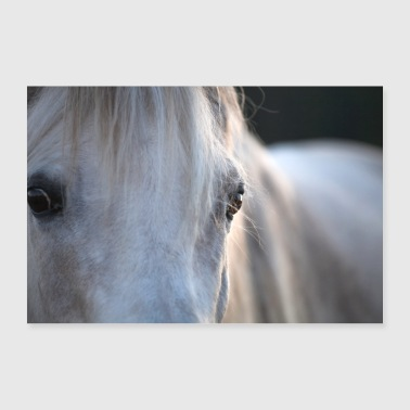 Stallion White horse gray stallion eyes mane - 30x20 cm Poster