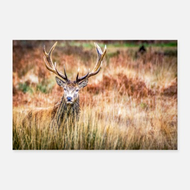 Chasse Cerf - Poster 30 x 20 cm