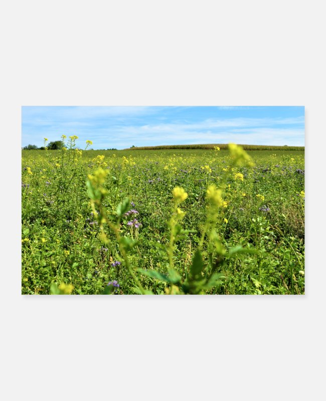 Calm Posters - flower meadow - Posters white