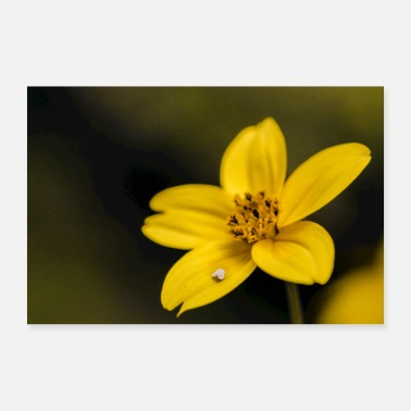 Yellow Yellow star - 30x20 cm Poster