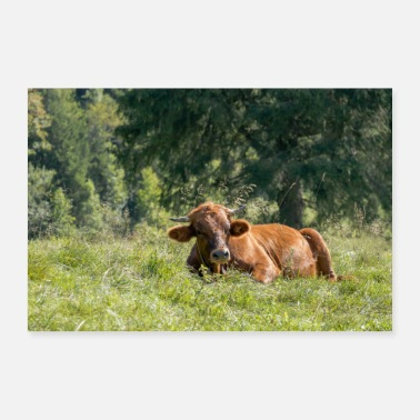 Alm Cow on Alm - German Alps - Bavaria - Gift - Poster