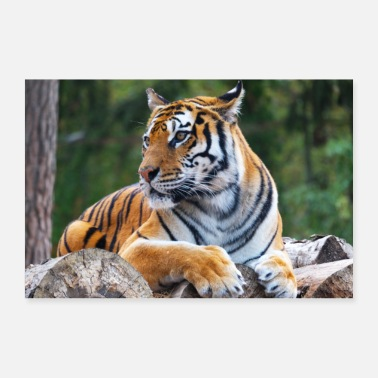 South Africa Tiger poster - 30x20 cm Poster