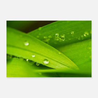 Leaf Leaf and raindrops - Poster