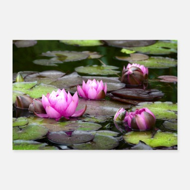 Water water lily - Poster