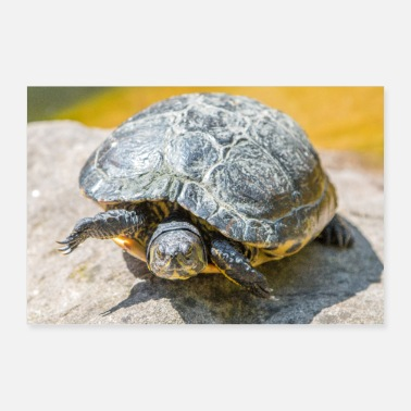 Yellow Yellow-cheeked Turtle Yellow-bellied - Poster