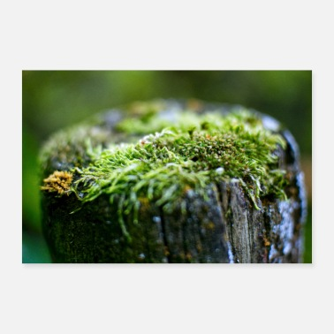 Sock Small micro-cosmos Peat Moss in the forest - Poster