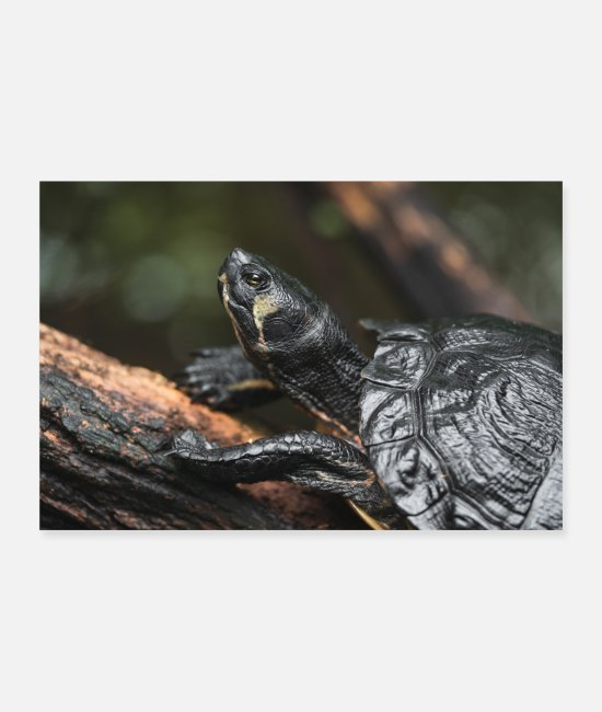 Nature Posters - turtle - Posters white