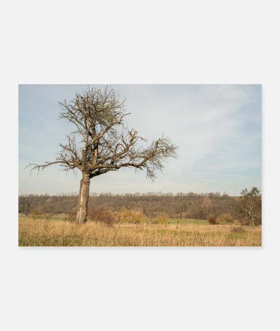 Nature Posters - old tree - Posters white