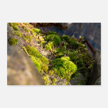 Stem Moss on stone and trunk - Poster