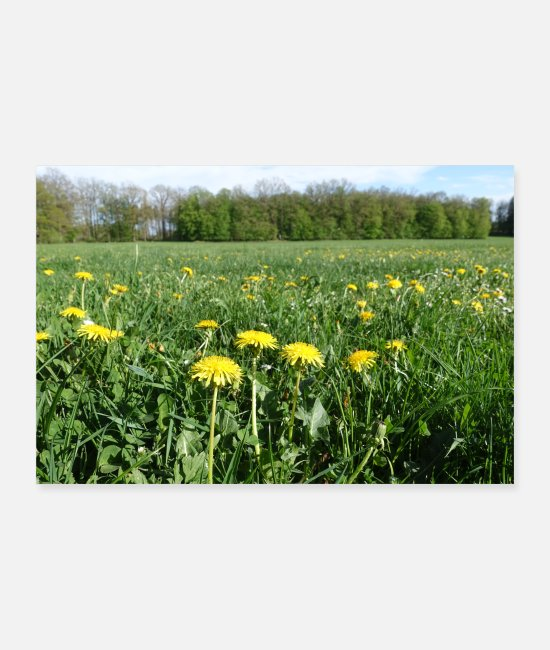 Nature Posters - Meadow with flowers - Posters white