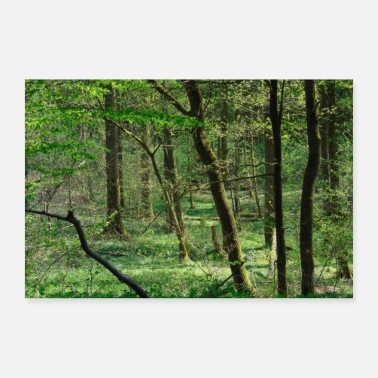 North German forest view - Poster
