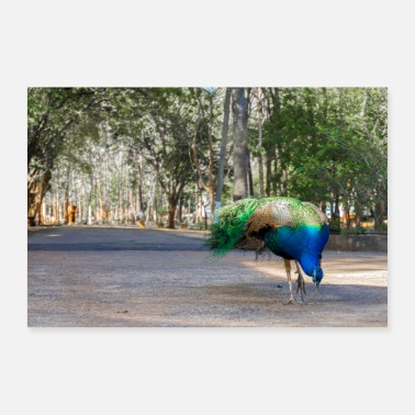 Plant-grounds Blue peacock in Thailand - Poster