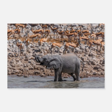 Young Young elephant at the waterhole - Poster