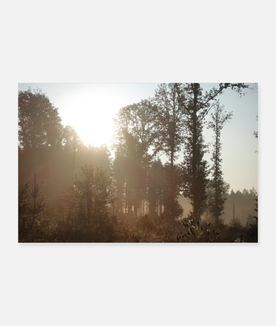 Nature Posters - Beau paysage forestier - Posters blanc
