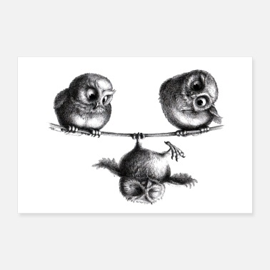 Three owls - freedom and fun - Poster