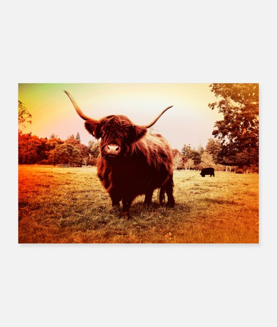 Nature Posters - Scottish Highland Cow landscape - Posters white