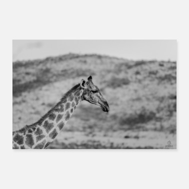 Giraffe wandering through - Poster