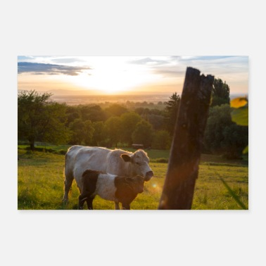 Sweet Cow Cuddling cows - Poster
