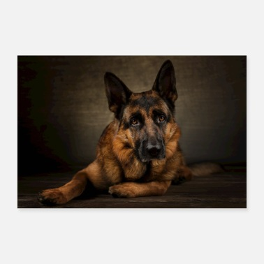Shepherd German Shepherd German Shepherd - Poster